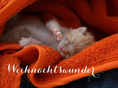 Kitten_Neu