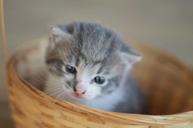 kitten-756956_640